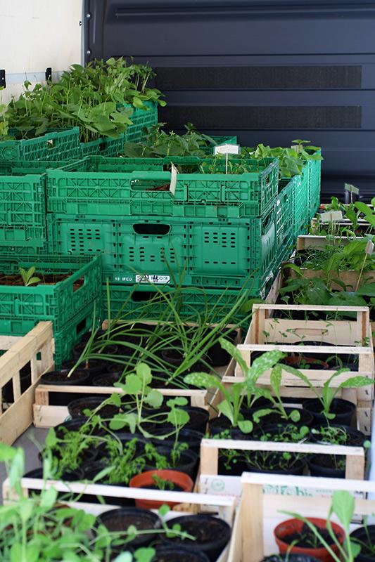 Wild und Knackig: kistenweise Pflanzen