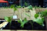 Wild und Knackig: die Nutzpflanzenausstellung