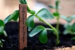 Wild und Knackig: alle Pflanzen sind beschriftet